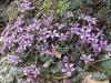 Flore de la région (1er mai 2006)