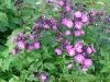 Superbes fleurs à Aujon (11 septembre 2004)