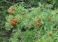Un des magnifiques spécimens de fleur rencontré lors de cette randonnée (11 septembre 2004)
