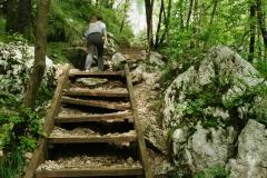 Petit escalier en bois dans la forêt (2 septembre 2018)