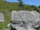 Sapin isolé sur son rocher (1er septembre 2006)