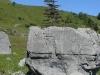 Sapin isolé sur son rocher