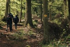 Suivre les losanges jaunes dans la forêt (5 mai 2019)