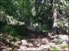 Dans la forêt vers le refuge