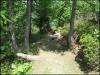 Dans le bois des Chosalets