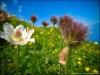 Fleurs (24 juin 2012)