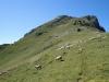 Troupeau dévalant l'alpage (10 septembre 2011)