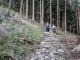 Montée dans la forêt