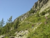 Sentier (18 aout 2007)