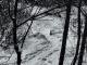 Sous la neige, le sentier prend une tout autre tournure (25 novembre 2018)