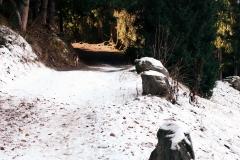 Sentier forestier pour le moins bucolique en fin de saison (25 novembre 2018)