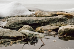 Rives du Lac d'Armancette (25 novembre 2018)