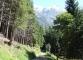 Sentier (7 septembre 2006)