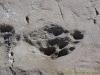 Site des traces de dinosaures
