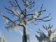 Les arbres prisonniers de la glace