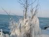 Arbre gelé