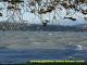 Lac léman par forte bise
