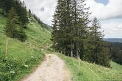 Le chemin est relativement plat (21 juin 2020)