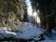 Dans la forêt (23 février 2014)