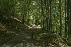 Chemin forestier (31 mai 2019)