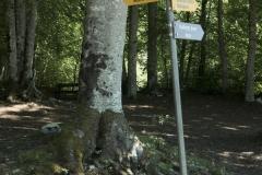 Arrivée au parcours Vita où il faut suivre la direction du Mont d'Or (31 mai 2019)