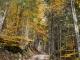 Dans la forêt (24 octobre 2015)
