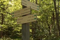 Arrivée à une intersection où il faut continuer de suivre la direction du Creux du Loup et du Pré Vernet pour rejoindre le parking (24 juin 2018)