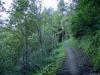 Dans la forêt longeant Montroc (9 septembre 2016)