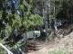 Entrée en forêt (6 mai 2006)