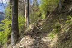 Montée dans la forêt (12 mai 2019)