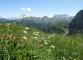 Fleurs de montagne devant les dents du Midi