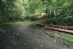 Le sentier débute dans la forêt (21 juillet 2019)