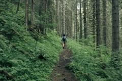 Le sentier continue dans la forêt (21 juillet 2019)