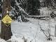 """Suivre le balisage """"Trail 10"""" dans la forêt (15 décembre 2018)"""