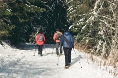 Le sentier continue dans la forêt de sapins (15 décembre 2018)