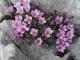 Fleur (6 mai 2007)