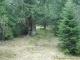 Entrée en forêt