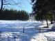 Dans la forêt (15 janvier 2006)