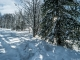 Montée dans la forêt (22 janvier 2016)