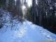 Sentier au départ des Granges (15 janvier 2006)