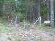 Chemin forestier (13 novembre 2005)