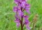Magnifique flore de la région (28 mai 2006)