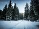 Dans la forêt un peu avant le départ (27 décembre 2015)
