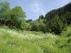Alpage d'Uble (18 juin 2006)