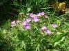 Autre fleur (18 juin 2006)