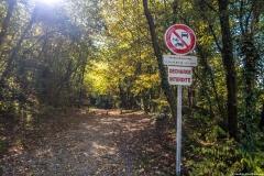Début de l'ascension dans la forêt du Petit Salève (13 octobre 2017)