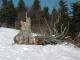 Après le coup de vent de janvier 2003 (22 février 2003)