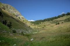 Prairie avant le Col de l'Aup Couti (26 aout 2018)