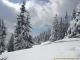 Superbes sapins sous la neige (12 mars 2006)