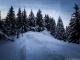 Sentier dans la forêt (31 décembre 2013)